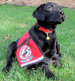 Training Your Dog To Be A Service Animal