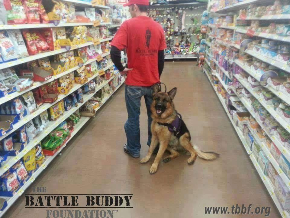 Service Dog Working
